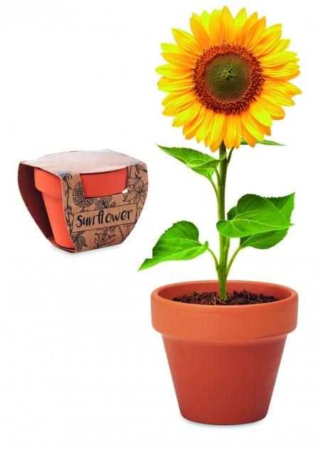 Terracotta-Topf mit Sonnenblume